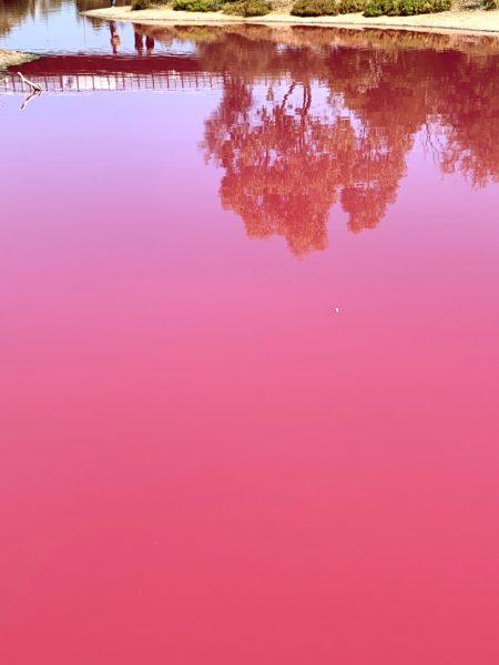 Westgate Park - Pink Lake Melbourne